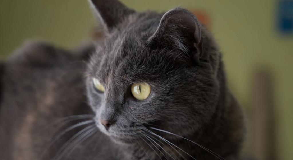 Zaskakujący wpływ kotów na gospodarkę. To jednak nie wszystko