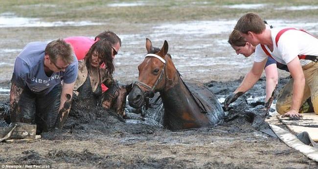 Koń tonął. Opiekunka nie traciła nadziei.