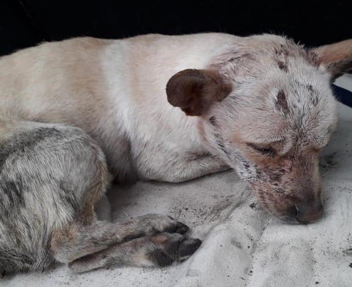 Wsadzili psa w worku do śmietnika, tonął w popiele. TVN24 huczy