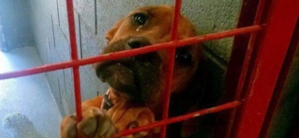 Cierpiący pies płakał i błagał o adopcję. Przechodzi ludzkie pojęcie to, co stało się potem