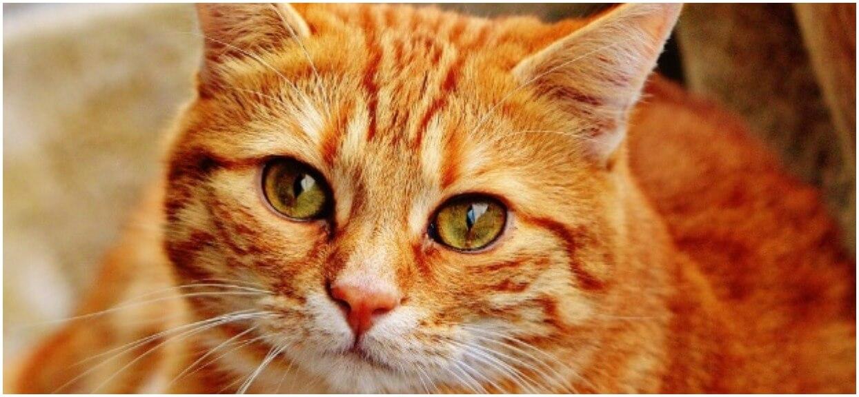Ile żyją koty? Proces starzenia u kotów