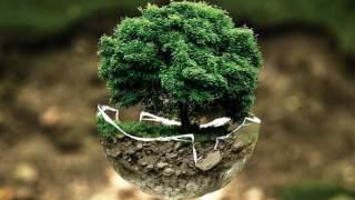 Czy Godzina dla Ziemi chroni środowisko? Dane nie pozostawiają wątpliwości