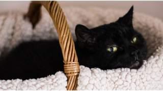 Czemu koty mruczą? Najważniejsze przyczyny mruczenia