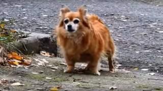 Właściciel porzucił psa przy drodze. Reakcja zwierzaka wyciska łzy, łamie serca