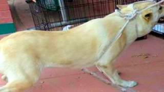 Rodzina postanowiła oddać psa do schroniska. Jego reakcja wzruszy najtwardsze serce