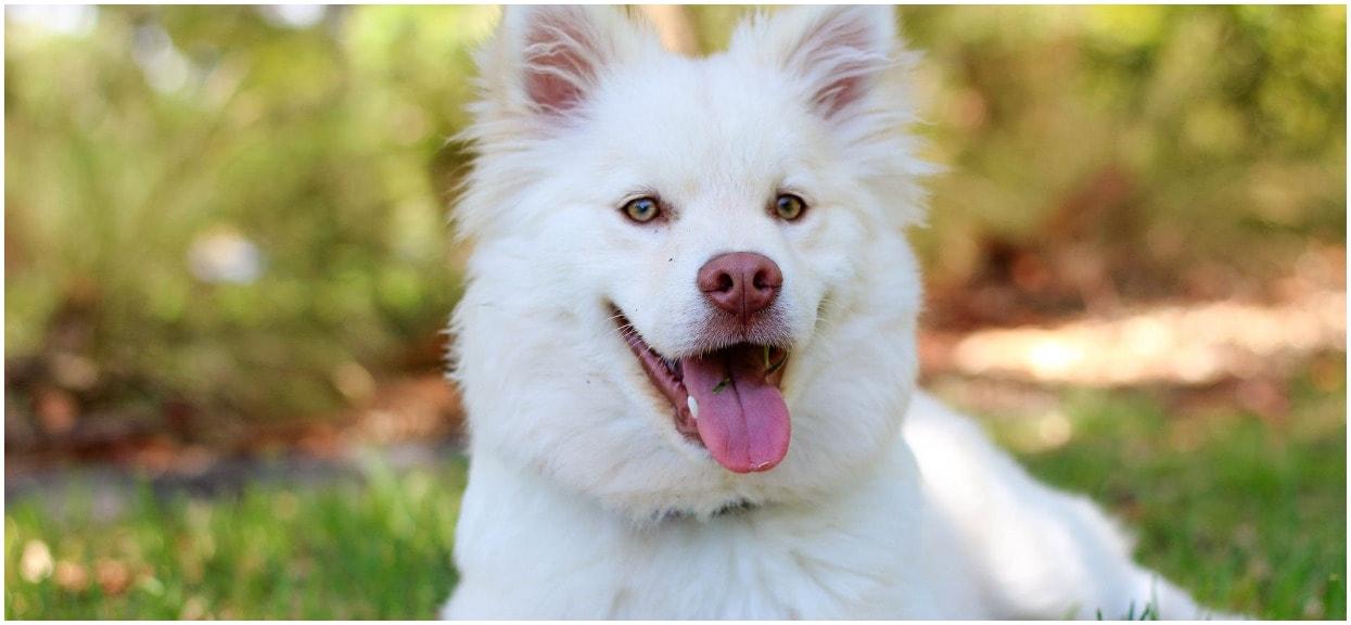 Kogo pies uważa za pana? To nie musisz być Ty