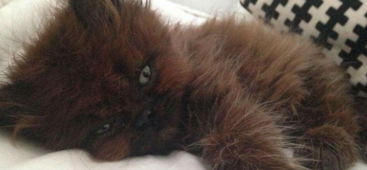Adoptowała chorego kotka. Kiedy zaczął dorastać, przecierała oczy ze zdumienia