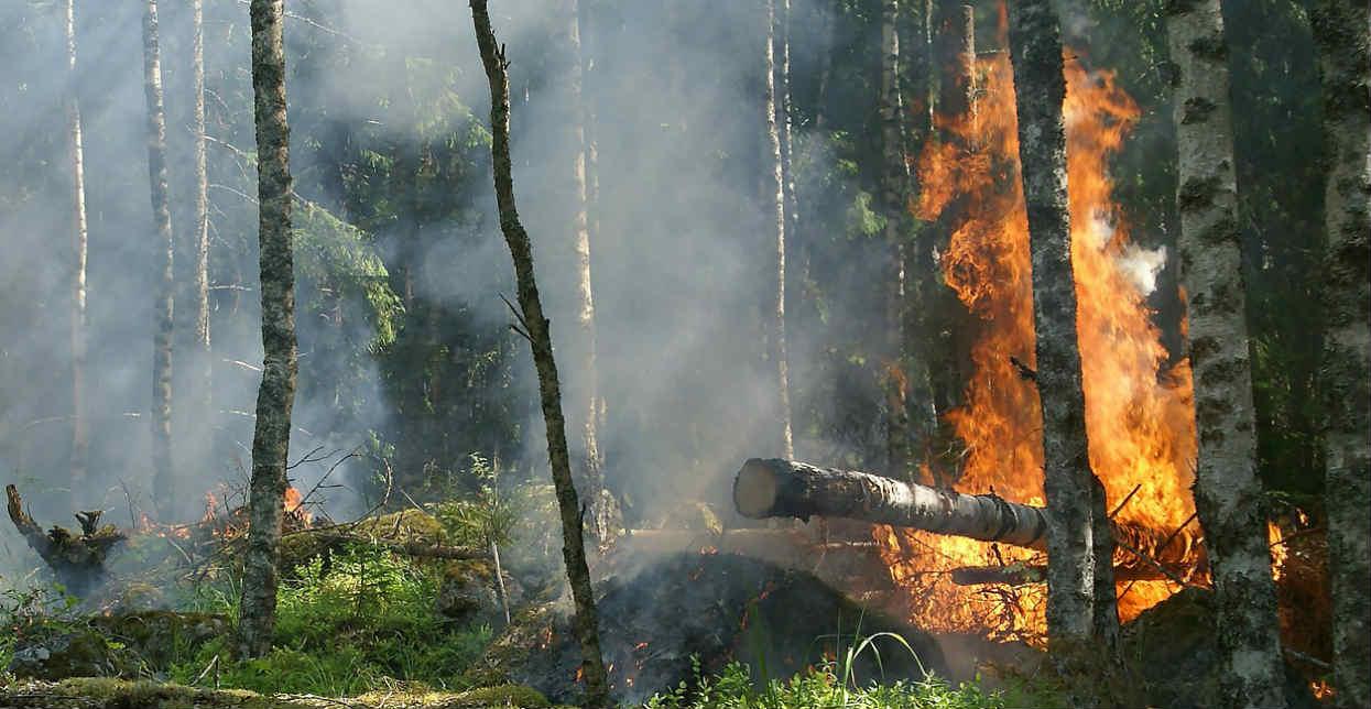 Groźny pożar na Mazowszu! Ogień rozprzestrzenia się na wielkim obszarze, celowe podpalenie?