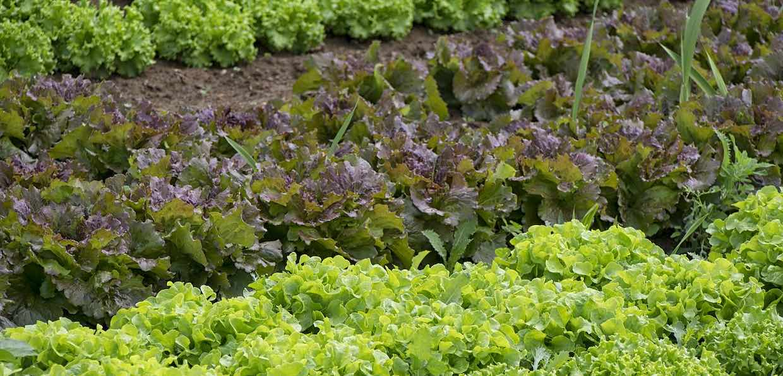Jak założyć własny ogródek warzywny? To naprawdę proste