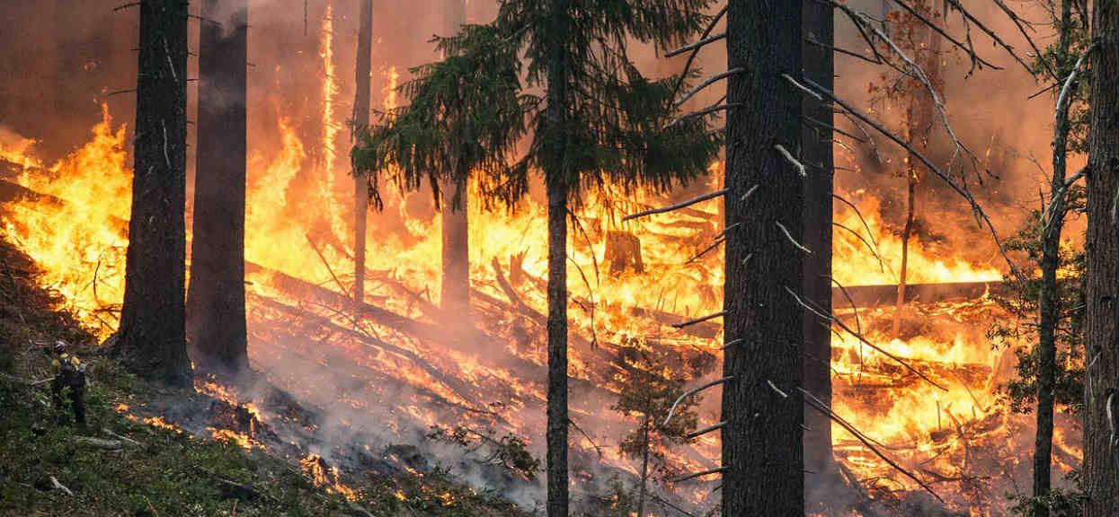 Na północy Europy rozpętało się piekło. Lasy płoną, setki ludzi uciekają