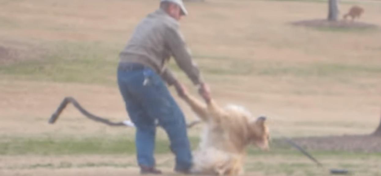 Jego pies udawał martwego w środku miasta. Powód bawi do łez