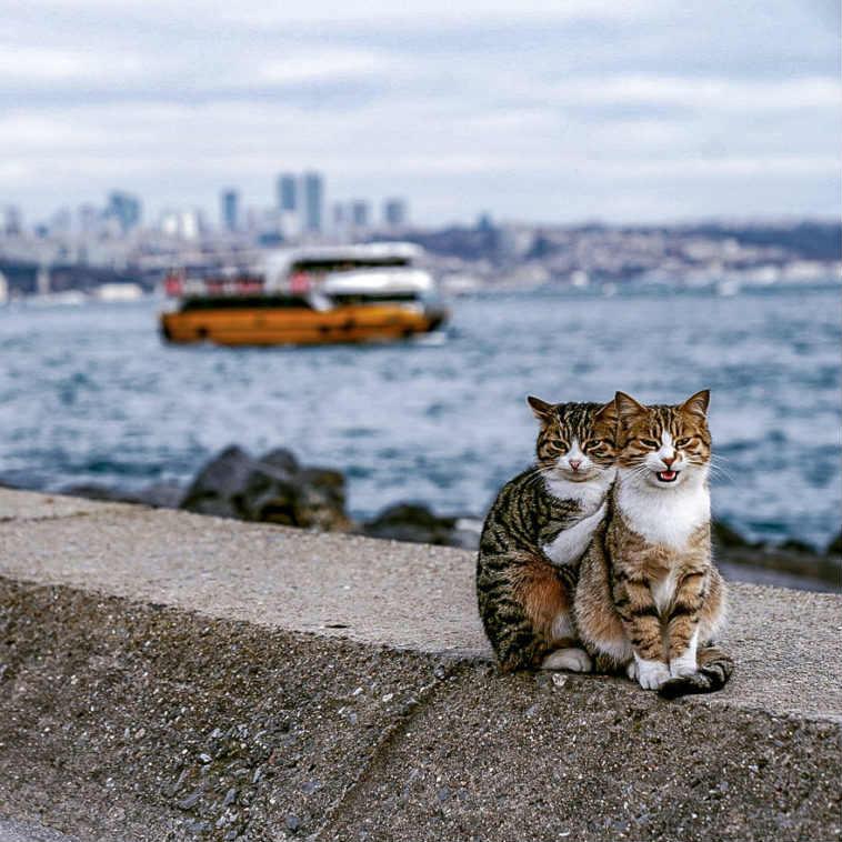 Zdjęcia tych kociaków wyglądają jak z Photoshopa. Są prawdziwe i niezwykłe
