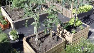 Ogród warzywny w skrzyniach. Czy warzywa się rozwiną?