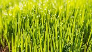 Jak przygotować trawnik na wiosnę? Wcześniej sprawdź pH gruntu