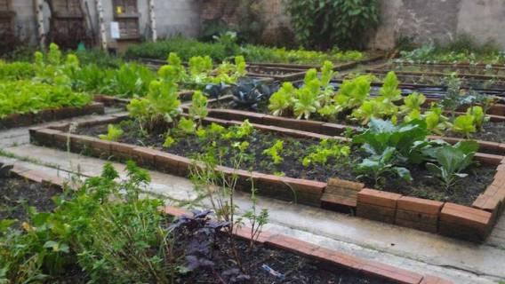 Ogródek warzywny projekt i plan działania