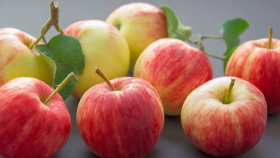 Skórka z jabłka właściwości