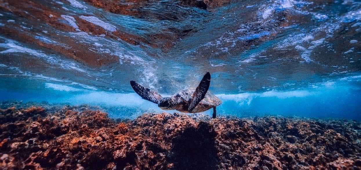 Dzień Żółwia - dlaczego to święto jest ważne?