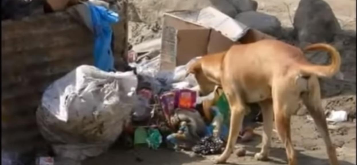 Wyrzucili noworodka na śmietnik. Pies go wyjął i zrobił niesamowitą rzecz