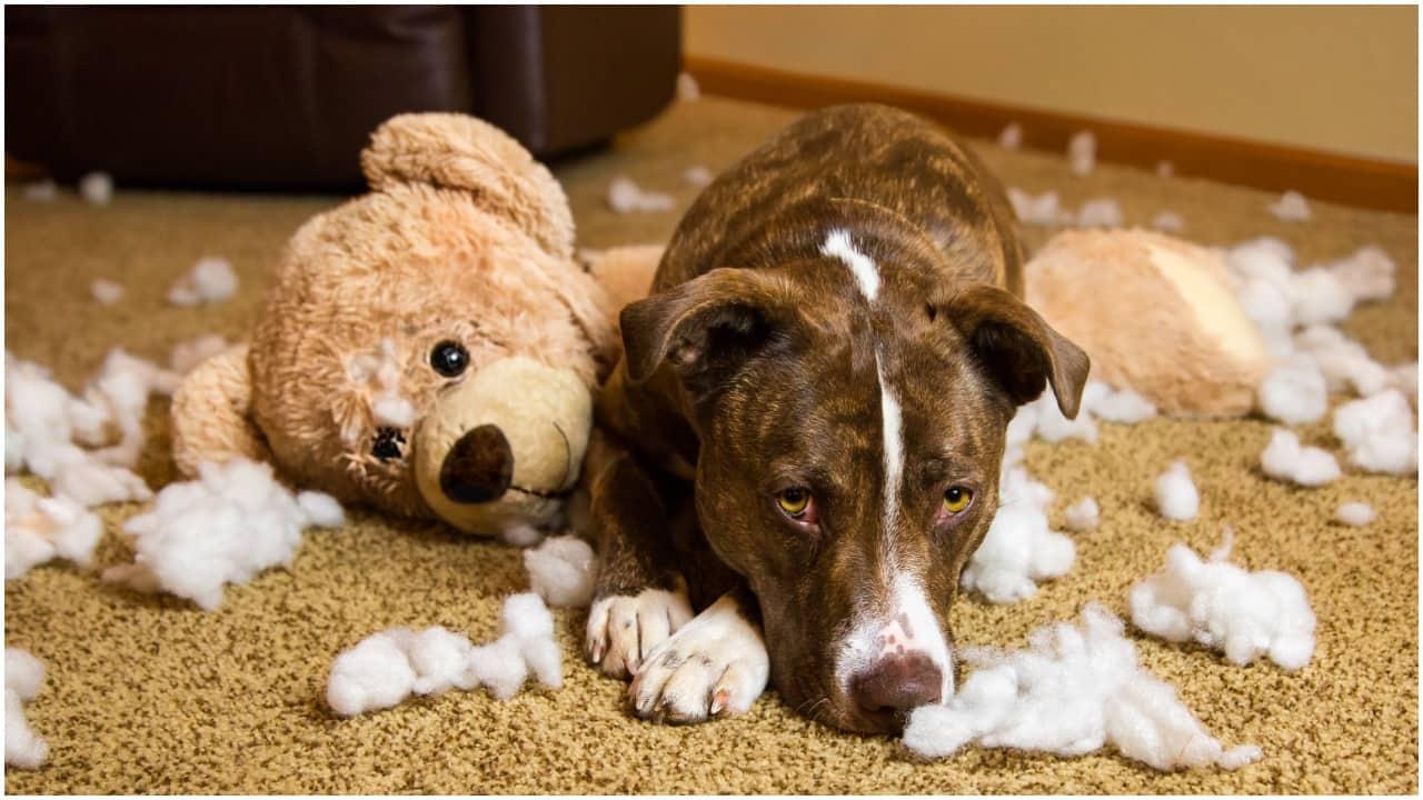 Psy prawie utonęły. Horror w schroniskach na skutek ulewy