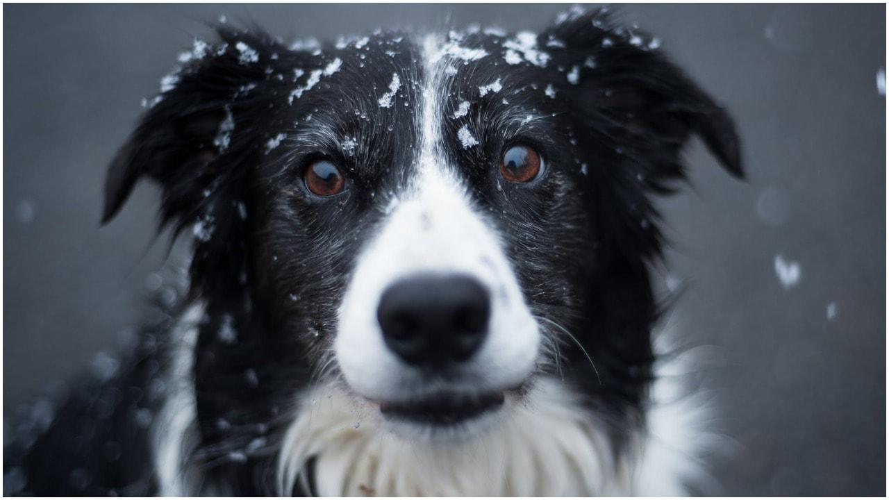 Psi psycholog nie ma najmniejszych wątpliwości. Te rasy psów zaskakują inteligencją