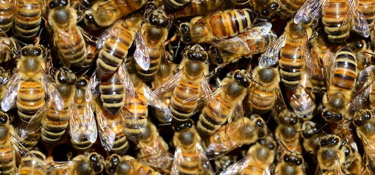 Czym grozi użądlenie pszczoły? Kiedy po tygodniu nie zeszła opuchlizna, lepiej iść do lekarza