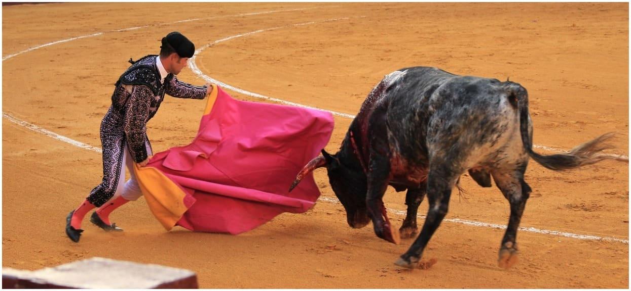 Byk płakał przed śmiercią, torreador był uradowany. Nagranie jest wstrząsające
