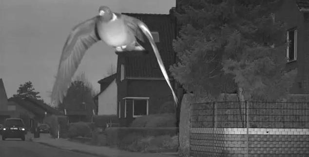 Najlepsze zdjęcie z fotoradaru w historii. Gołąb przekroczył prędkość