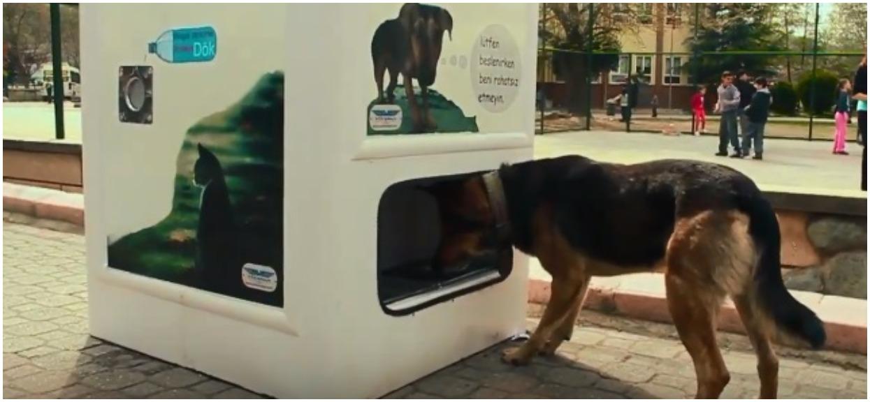 W Turcji zamontowali automat oferujący karmę dla psów w zamian za plastikowe butelki