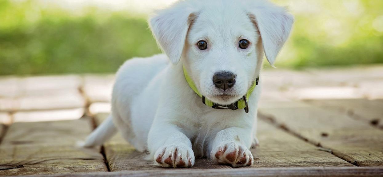 Najnowsze badania nie pozostawiają złudzeń. Ludzie bardziej kochają psy niż innych ludzi