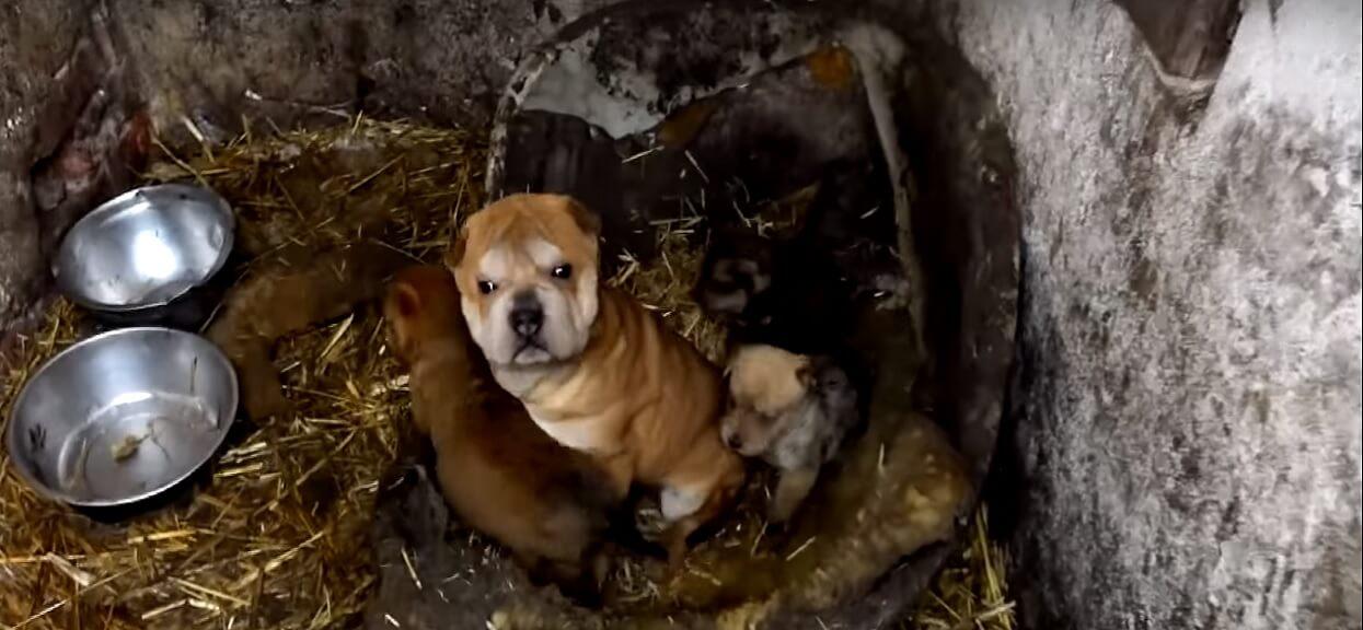 Chciał go adoptować, znajomi ostrzegali. Pies wywrócił jego życie do góry nogami