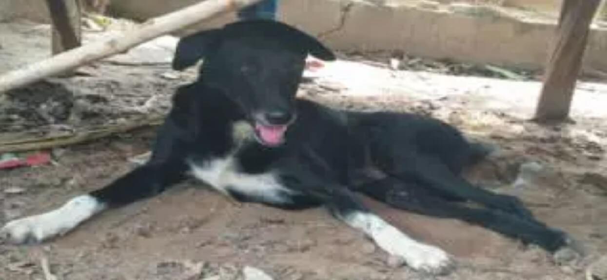 Pies z niesprawną łapą nagle zaczął kopać. Kiedy właściciel zobaczył, co znajduje się pod ziemią, zamarł