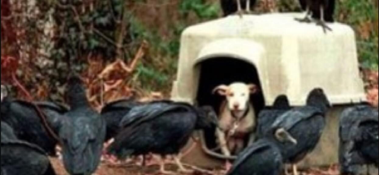 Suczka skazana na śmierć, sępy czekały na jej koniec. Finał historii wyciska łzy