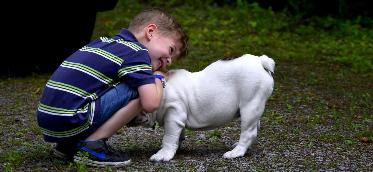 Dzień Praw Zwierząt w szkole i przedszkolu - pomysły na zajęcia