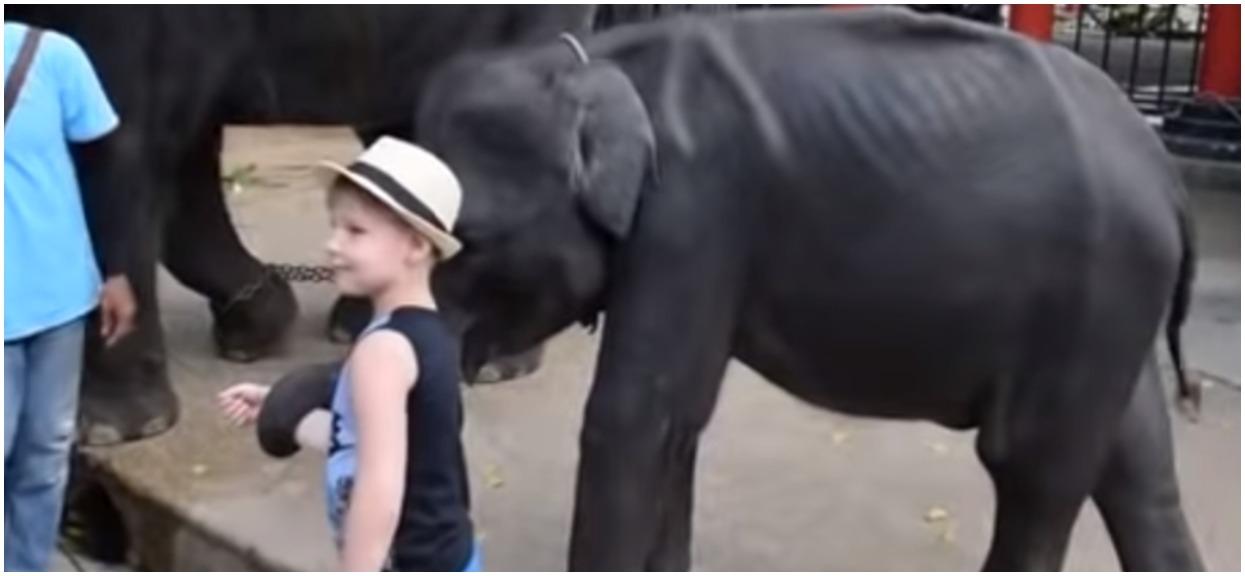 Zadręczyli biednego słonia na śmierć. Pękły mu nogi