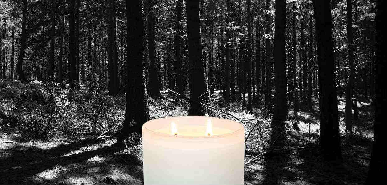 Nieszczęśliwy wypadek w polskim lesie. TVP przekazała wiadomość o nagłej, przypadkowej śmierci mężczyzny