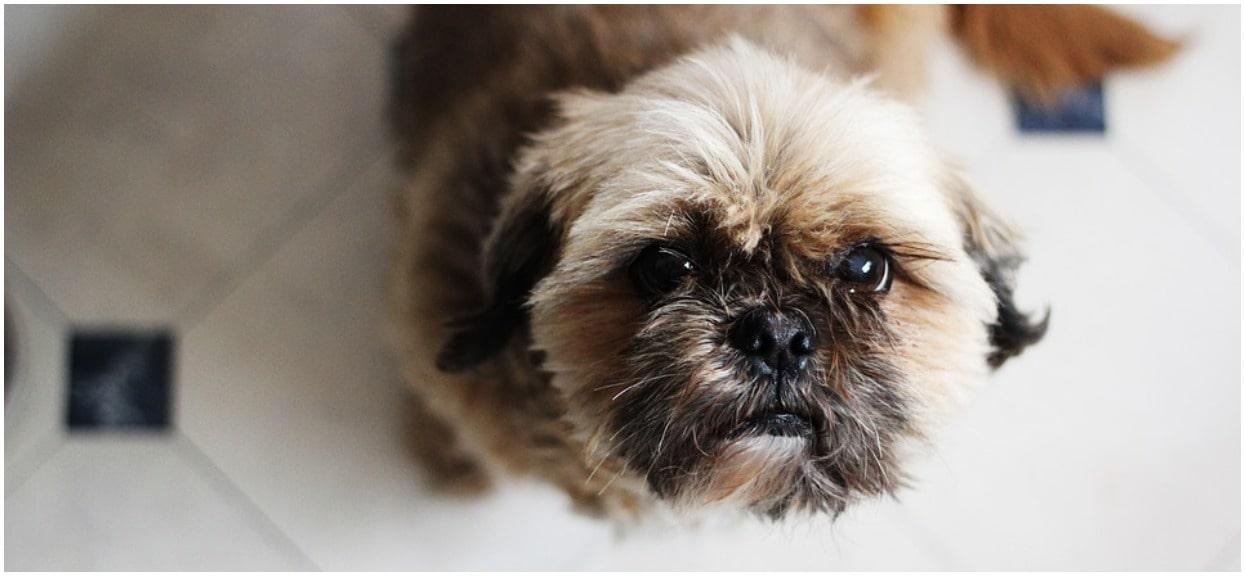 Właścicielka psa zmarła. Przed śmiercią przekazała bliskim okrutne życzenie na temat swojego pupila