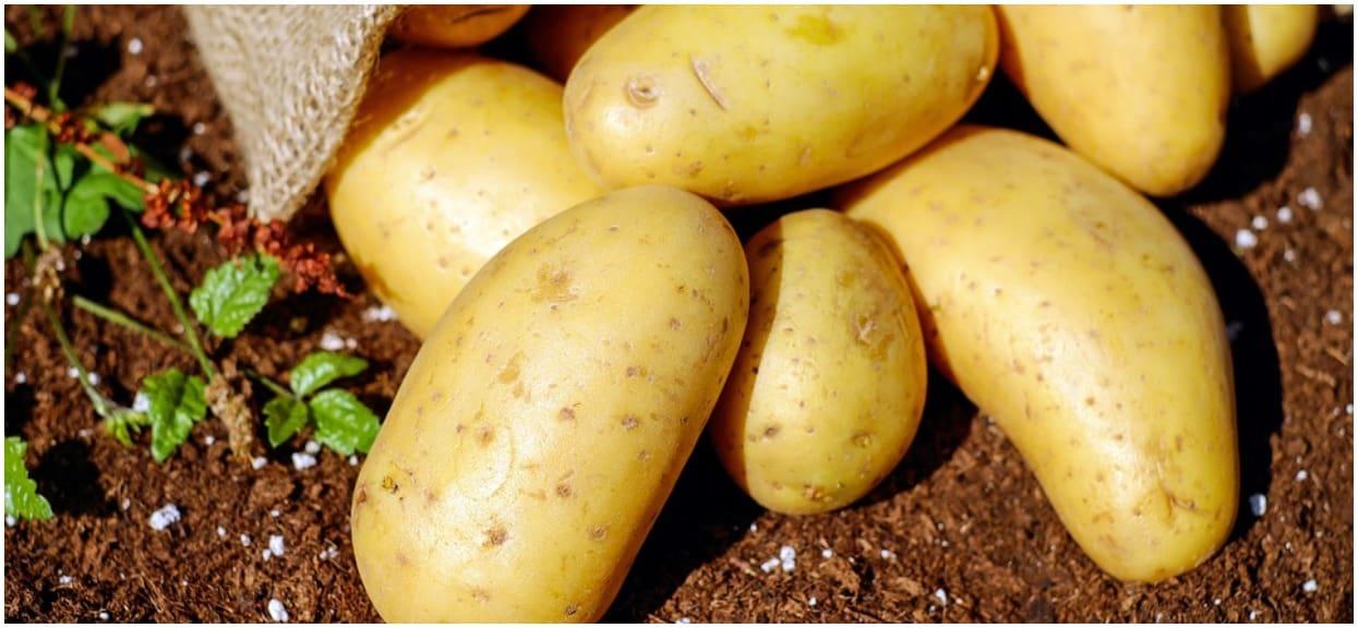 To już absurd! Ziemniaki droższe od bananów, co trzecią polską rodzinę nie stać na owoce i warzywa