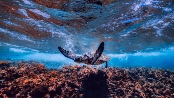 Dzień Żółwia - zdjęcia słodkich wodnych zwierząt