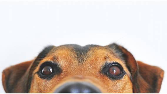 Czy pies ma duszę?
