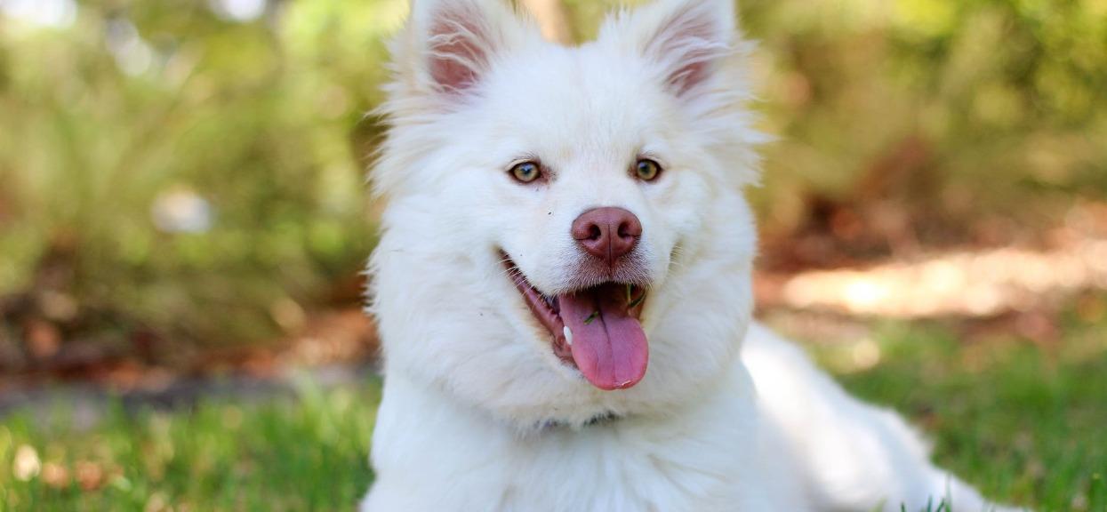 Jakiego psa wybrać? Znak zodiaku powie ci wszystko