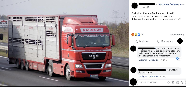 """To jakiś ponury dowcip? Firma z Podhala wozi ŻYWE zwierzęta na rzeź w ciężarówkach z napisem """"Kabanos"""""""