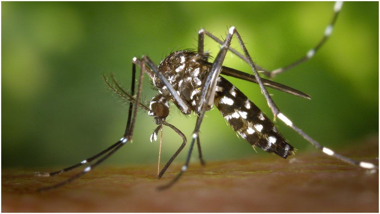 Pradawny staropolski sposób na komary zwala z nóg. Przynosi piorunujące efekty