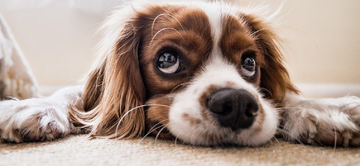 Pod żadnym pozorem nie dawaj psu takiego jedzenia! Może zadziałać jak trucizna
