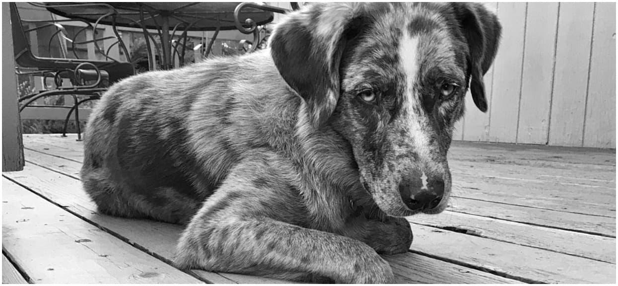 Niewyobrażalne okrucieństwo. Pies leżał porzucony na poboczu drogi, oczy i pysk miał zaklejone