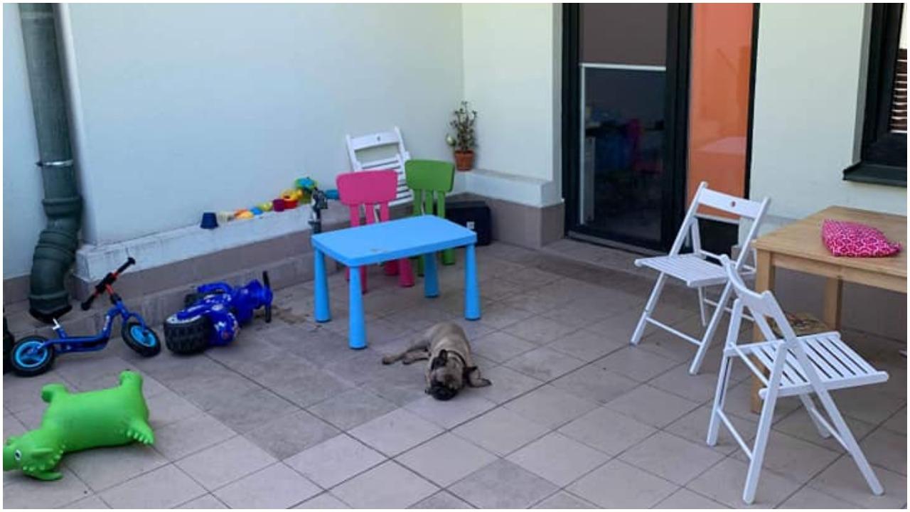 Właściciele zostawili psa na tarasie. Kilka godzin później leżał martwy wśród własnych odchodów