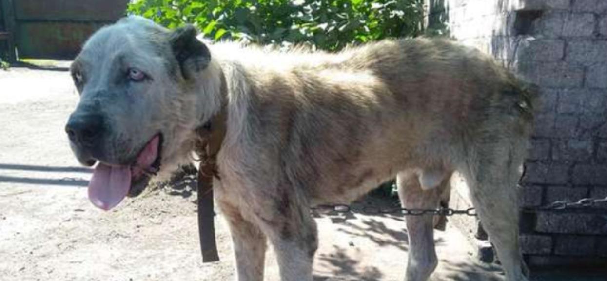 Jej pies zaginął 2 lata wcześniej. Gdy zobaczyła zdjęcia za schroniska, nie mogła uwierzyć