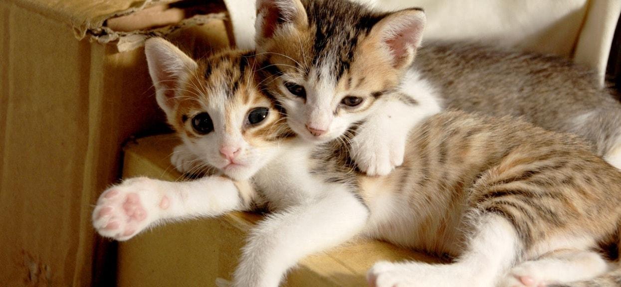 Ile kosztuje wyprawka dla kota? Można ją dostać za darmo