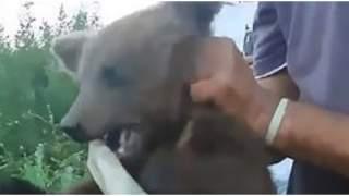 Okrutnie i bezdusznie torturowali małego niedźwiadka. Zwierzę wyło z przerażenia