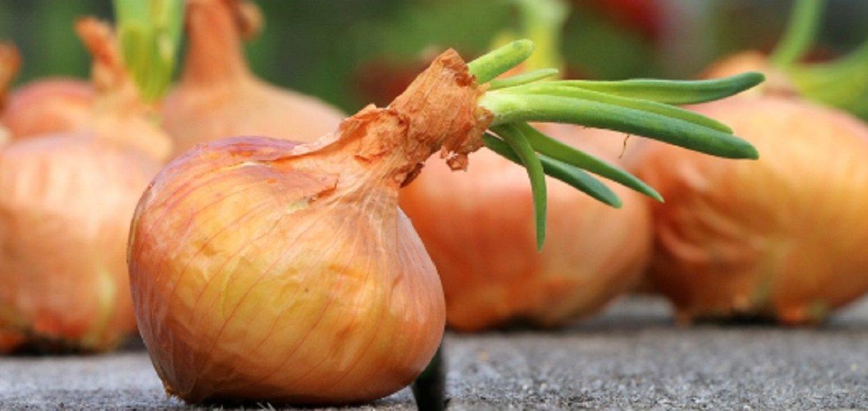 Dieta cebulowa została dawno zapomniana. Niesłusznie, bo przynosi piorunujące efekty
