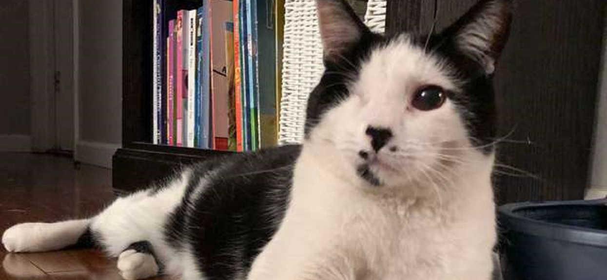Monitoring pokazał, co młody chłopak robił z kotem sąsiadów. Internauci nie mogą powstrzymać łez